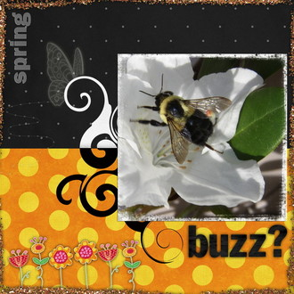 What's the Buzz?  (right)