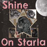 Shine On Starla (May One Word Challenge)