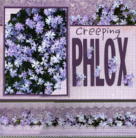 Creeping Phlox