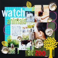 watch animals