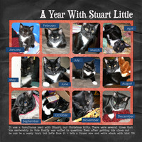 A Year With Stuart Little {CT Reveal}