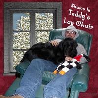 Teddys Lap Chair