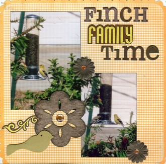 Finch Family Time