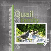 Quail Family - Challenge #9