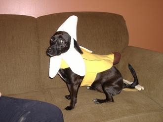 Halloween! Going bananas!