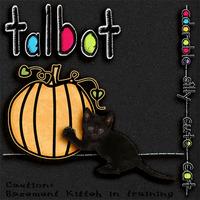 Talbot....Basement Kitteh in Training