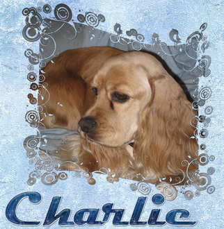 My new foster Charlie