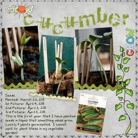 Grow Cucumber Grow
