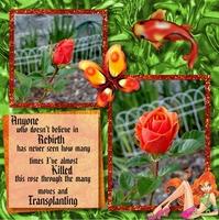Rebirth of a Rose