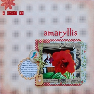 A Study of Amaryllis