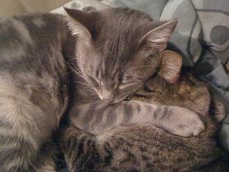 Hugging Cats