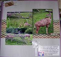 Zoo - Kudu
