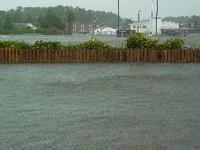 After Hurricane Isabel: Backyard View