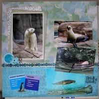 Splish Splash (Zoo)