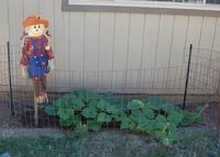 "My pumpkin ""Patch"""