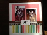 Sit - Pet/Animal Challenge