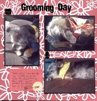 Grooming Day