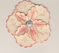 Pink and cream flower