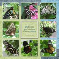 Key West Butterfly Conservatory #2