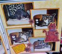 More Kitty Layouts
