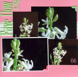 Fave Flower