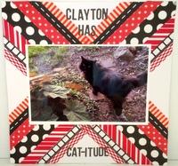 Clayton Has Cat-itude