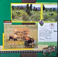 Denali Moose 1