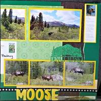 Denali Moose 2