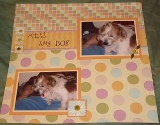Miss Amy Dog