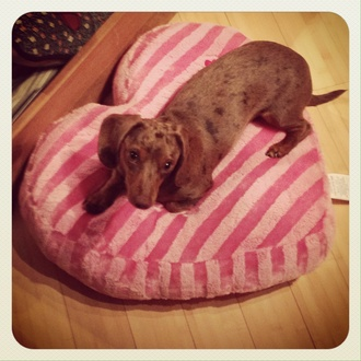 Cocoa Puff on Pillow