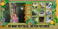 so many reptiles