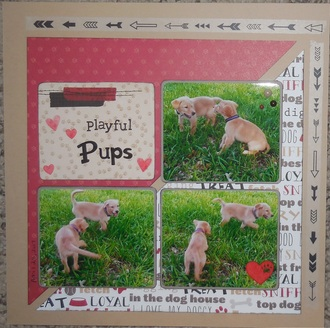 Playful Pups