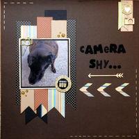 Camera Shy... (Sept 2017 Pet Challenge)