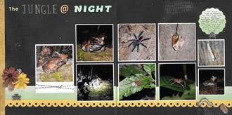 The Jungle @ Night