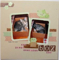 Great American Box Cat