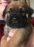 Beezo, four weeks old
