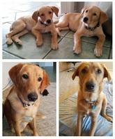 One year Adoption Anniversary