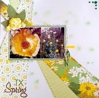 TX Spring
