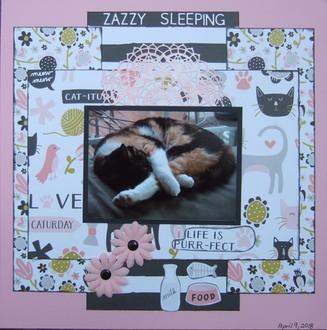 Zazzy Sleeping