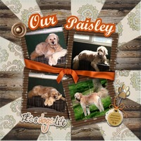 Our Paisley