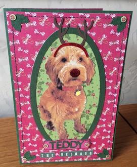 Teddy the Reindog