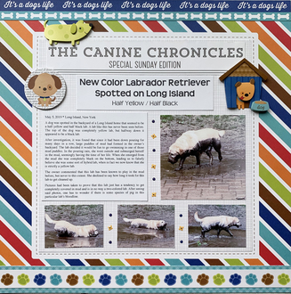 The Canine Chronicles