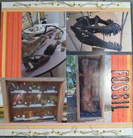 Big Fossils