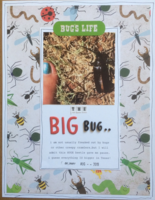 the big bug