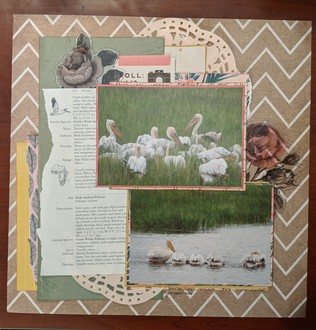 Untitled (pelicans