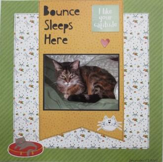 Bounce Sleeps Here