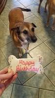 Penny's Birthday Bash