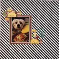 Taco Pup