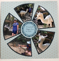 A Visit to the Petting Zoo