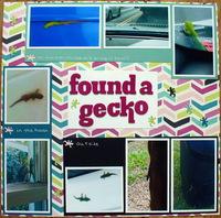found a gecko